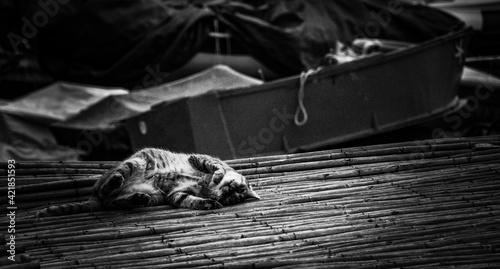 Cat Sleeping Fototapet