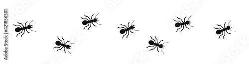 Fotografie, Obraz Ants marching in search background