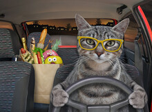 A Gray Cat In Glasses Is Driving A Car On The Highway At Night. A Paper Bag With Food Is Next To Him.