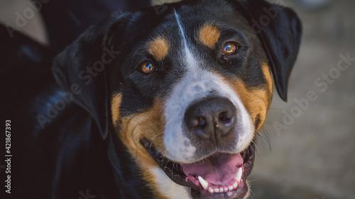 Close-up Portrait Of Dog Fototapet