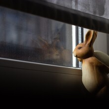 Close-up Of Stuffed Toy On Window