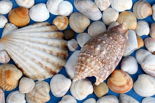 Leinwand Poster Seashells Close Up On Blue Background