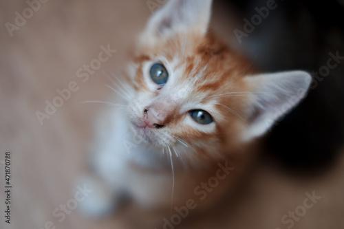 Vászonkép Close-up Portrait Of Cat