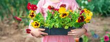 A Child Plants A Flower Garden. Selective Focus.