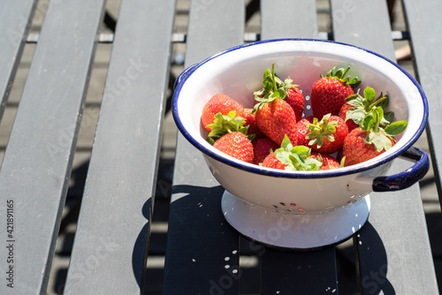 Fototapeta Bowl Of Fresh Strawberries In A White Bowl Or Colander On A Black Wooden Table Outdoors obraz
