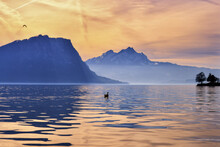 Silhouette Of A Swan On Lake Lucerne At Sunset With Mountain Backdrop, Switzerland