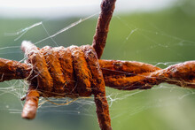 Close-up Of Rusted Barb Wire