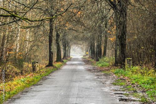 Fototapeta droga leśna dukt obraz
