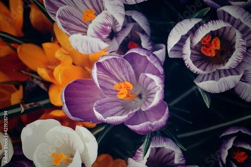 Obraz na plátně Close-up Of Purple Flowering Plants