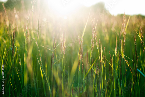 Foto Crops Growing On Field Against Bright Sky