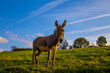 canvas print picture - Horse In A Field