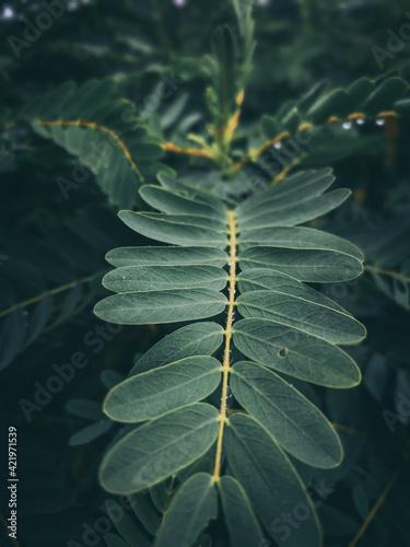 Fototapeta Close-up Of Plant Leaves obraz