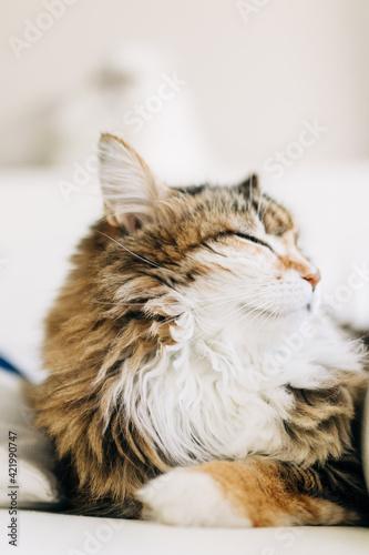 Fényképezés Close-up Of A Cat