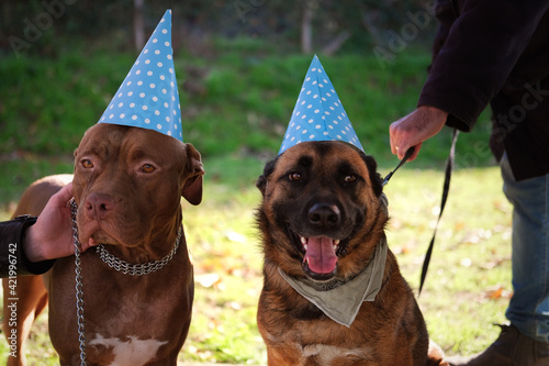 Fototapeta Close-up Of Dogs Against Blurred Background obraz