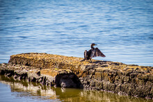 View Of Cormorant Bird On Rock By Sea