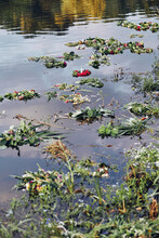 Flower Wreaths On The Water
