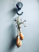 Close-up Of Onions Hanging On Grey Wall