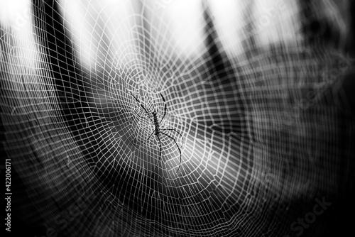 Tela Close-up Of Spider On Web