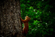 canvas print picture - Squirrel On Tree Trunk