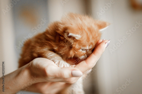 Stampa su Tela Close-up Of Hand Holding Cat