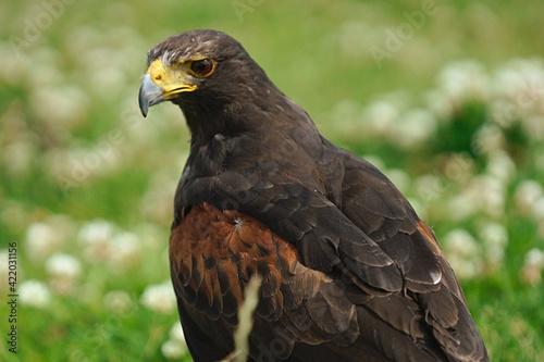 Foto Close-up Of Bird Of Prey
