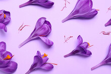 Beautiful Saffron Crocus Flowers On Light Violet Background, Flat Lay