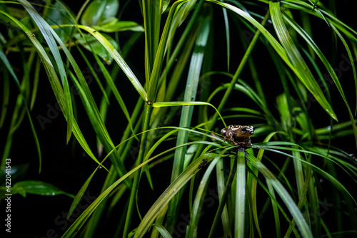 Canvas Print Close-up Of Insect On Grass