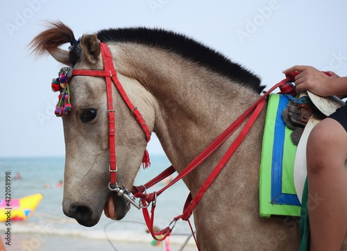Fotografia, Obraz Man With Horse