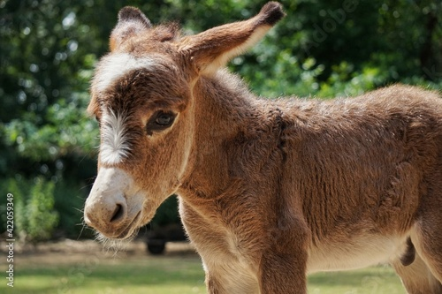 Vászonkép Close-up Of A Young Donkey