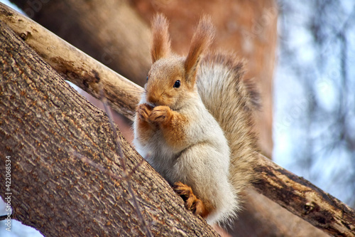 Fototapeta Low Angle View Of Squirrel On Tree Trunk