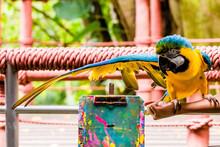 Ma.. Look At My Long Wings - Jurong Bird Park, Singapore