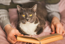 A Man In A Sweater Lies With His Gray House Cat On A Bed With A Pink Blanket And Reads An Interesting Old Book. Rest At Home. Spending Time With Your Pet.