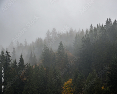 Fotografia Trees In Forest Against Sky During Autumn