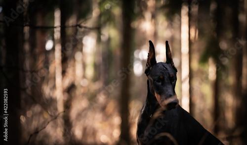 Vászonkép Portrait Of Dog In The Forest