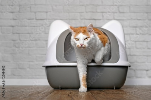 Canvastavla Funny Tabby Cat Going Out Of A Litter Box