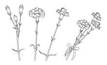 シンプルなカーネーションのイラスト(線画)