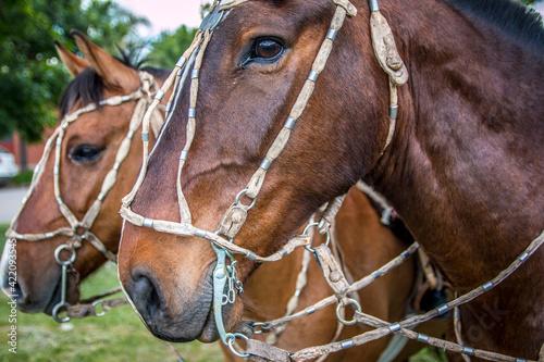 Fotografia, Obraz Close-up Of Horse In Ranch