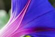 Leinwandbild Motiv Close-up Of Purple Flowering Plant
