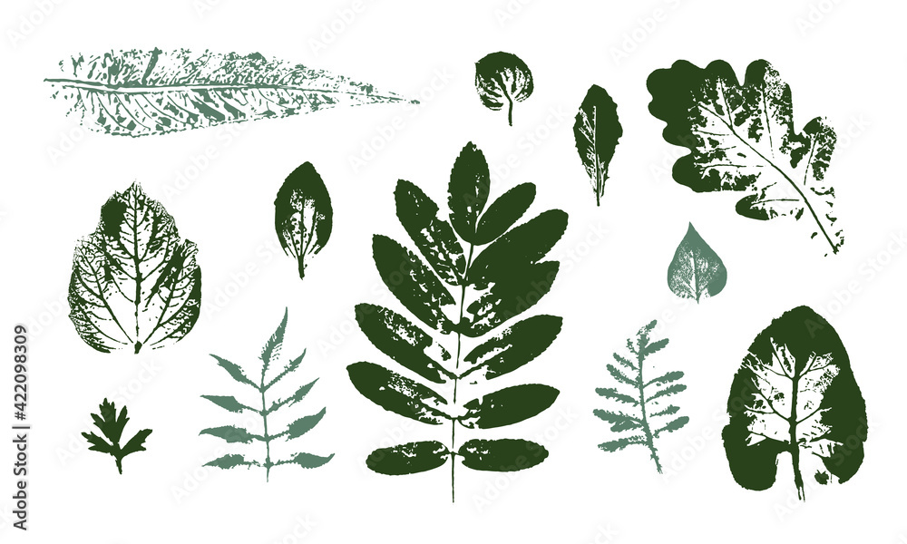 Fototapeta Vector Leaf print. Different black leaves stamp. Hand drawn floral elements.