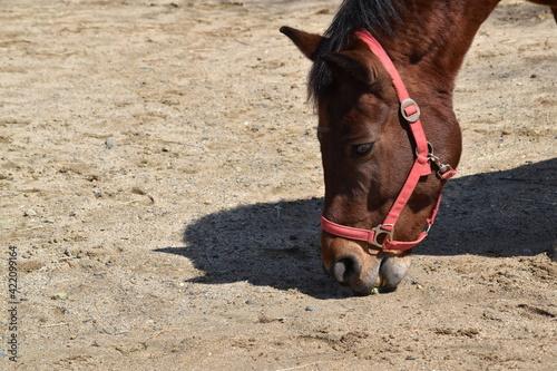 Fototapeta Horse Standing On Field