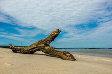 Privateer Point Driftwood