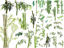 Isolated Large Set Of Dark Green Bamboo Branches