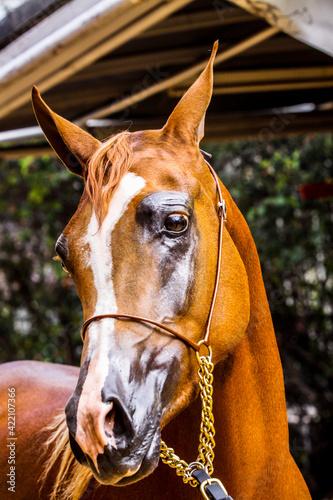Fotografia, Obraz Close-up Of A Horse Sideways