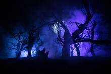 Spooky Dark Landscape Showing Silhouettes Of Trees In The Swamp On Misty Night. Night Mysterious Landscape In Cold Tones - Silhouettes Of The Bare Tree Branches Against The Full Moon