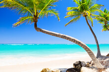 Coconut Palm Trees On White Sandy Beach In Punta Cana, Dominican Republic.