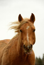 All Die Schönen Pferde. Portrait Von Freien Pferden Auf Der Weide