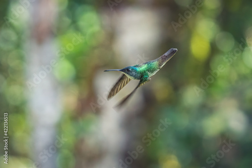 Fototapeta premium Selective focus of a hummingbird flying in a field under the sunlight with a blurry background