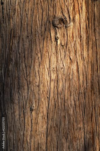 Billede på lærred Beautiful natural tree bark pattern