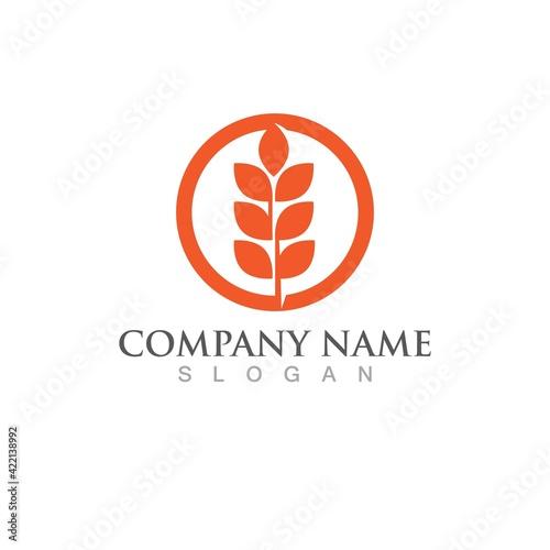 Fototapeta  wheat rice logo and symbol vector obraz