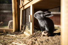 Cute Baby Rabbits In A Farm